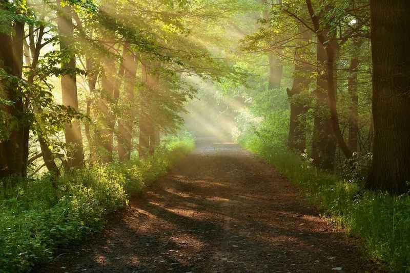 Beautiful morning in forest